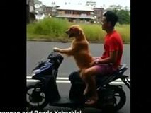 Clip: Chú chó lái xe máy chở chủ đi chơi