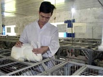 Từ chối làm giảng viên đại học, nuôi thỏ thu 3 tỷ/tháng
