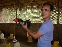 Bỏ giám đốc lên núi nuôi gà