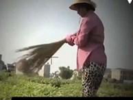 Yêu cầu VTV giải trình về phóng sự 'Cây chổi quét rau'