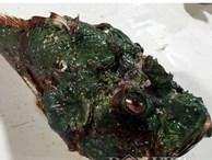 Cá mặt quỷ - đặc sản 'nhìn phát ghê, ăn lại mê'