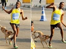 Mất huy chương vàng điền kinh vì bị chó hoang cắn vào chân