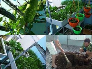 Đáng nể khu vườn 8m² vẫn thoải mái rau sạch ăn