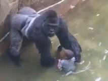 Bé 3 tuổi rơi vào chuồng khỉ đột: Bố mẹ bị điều tra