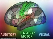 Phát hiện 100 vùng não mới có lợi cho y học