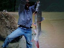 Săn cá khủng trên dòng sông huyền bí