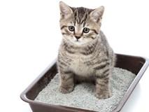 Thần dược chữa ung thư làm từ ký sinh trùng trong... phân mèo