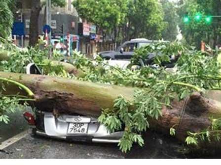 Bão quét tới Hà Nội, cây đè ô tô, xe máy đổ cả loạt