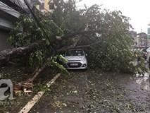 Video: Gió giật tung người trên đường Phạm Hùng