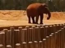 Bé gái 7 tuổi bị voi ném đá tử vong