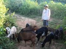 Vừa chăn dê vừa học, nam sinh vẫn đạt hơn 27 điểm khối B