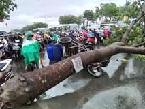Đang đứng trước cửa tiệm bị cây cổ thụ 30m bật gốc đè tử vong