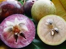 Lợi ích của 6 loại quả thuần Việt không nhập từ Trung Quốc