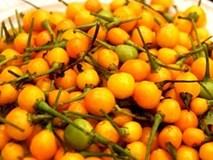 Hốt hoảng với loại ớt giá gần 600 triệu đồng một cân