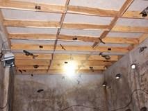Xây nhà lầu cho chim yến ở, thu trăm triệu mỗi năm