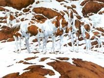 Trong bức hình có rất nhiều ngựa, nhưng bạn có đủ tinh mắt để tìm ra tất cả?