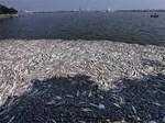 Hà Nội: Cá chết trắng trên hồ Văn Chương, người dân đau đầu vì mùi hôi nồng nặc-4
