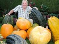 Khu vườn toàn củ quả khổng lồ của ông lão 67 tuổi, cứ thu hoạch là phải nhờ người tới khiêng