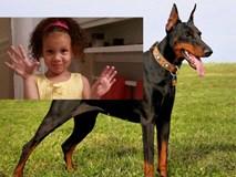 Vừa được nhận nuôi vài tiếng, chó Dobermann đã cắn chết cô chủ nhỏ 4 tuổi