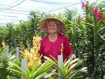 """Bà """"Trùm"""" hoa lan 70 tuổi kiếm 800 triệu/năm ở đất thép Củ Chi"""