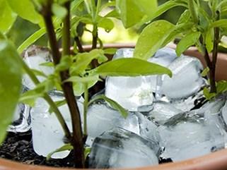 6 tác dụng lợi hại của đá lạnh trong việc chăm sóc nhà cửa