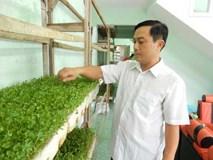 Trồng rau mầm trước sân, thu lãi 20 triệu đồng mỗi tháng