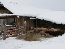 Ngôi làng băng giá chỉ có một người sinh sống