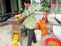 Kiếm 700 triệu/ha nhờ trồng và chế biến tinh bột nghệ