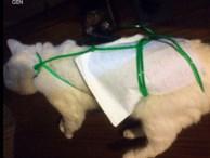 Trót phóng uế trên giường cậu chủ, chú mèo nhỏ bị giết hại dã man rồi livestream trên mạng