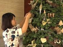 Cận Giáng sinh, cây thông Noel thật nhập từ Mỹ, giá bạc triệu vẫn hút hàng ở Sài Gòn