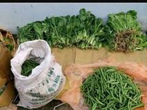 Đà Nẵng: Rau củ đắt hơn thịt bò, mẹ gửi rau quê vượt 500 km cho con