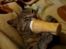 Mèo nằm ườn cầm kem ốc quế liếm khoái trá như người