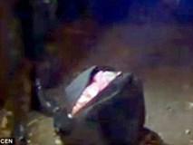 Bé gái 8 tuổi mất tích khi đi bộ đến trường, sau đó thi thể bé được phát hiện trong 1 chiếc vali