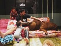 Sau 11 tháng, chó cưng nhà Messi lớn nhanh đến khó tin