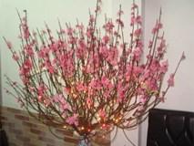 Cắm hoa đào hợp phong thủy, rước tài lộc vào nhà ngày Tết