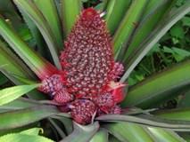5 loại trái cây khắc chữ giá tiền triệu vẫn nhiều người tìm mua dịp Tết