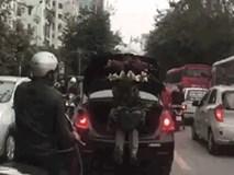 Ôm chậu hoa như báu vật, người đàn ông ngồi trong cốp ô tô khiến cả phố phải nhìn