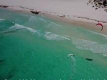 Đang lướt ván, thấy cá mập lừ lừ bơi ngay dưới chân