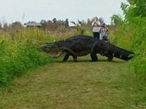 Trần đời có con cá sấu to như khủng long, lại còn đi thong dong khắp nơi như này