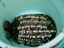 Mua 80 kg rùa giá 25 triệu ra sông Sài Gòn phóng sinh