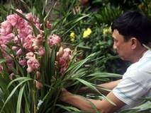 """Sát Tết, nhiều người """"ngậm đắng"""" khi mua phải cây cảnh """"dỏm"""": hoa, nụ được dán bằng... keo"""