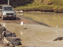 Úc: Đi qua cầu tràn, bị cá sấu lôi xuống sông cắn chết