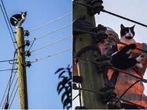 Ngắt điện cả khu vực để giải cứu chú mèo bị mắc kẹt trên cột điện suốt 24 tiếng đồng hồ