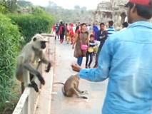 Người đàn ông gây phẫn nộ khi cho ăn rồi giáng cú tát đau đớn khiến chú khỉ bật ngã