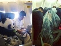 Chùm ảnh: Những hành khách khó đỡ của các hãng hàng không thế giới