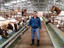 Bỏ lương 20 triệu/tháng về quê chăn dê thu 10 tỷ/năm
