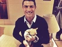 Ronaldo ra tay nghĩa hiệp cứu 80 chú chó