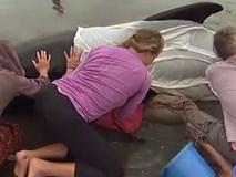 Người New Zealand đổ xô ra biển giải cứu cá voi