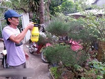 Chiêu lạ: Dùng bia để tưới cây, bón nấm ở Phú Yên