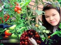 Thu 2 tạ cà chua một vụ, gia đình nàng dâu xứ Kim Chi đủ ăn cả năm